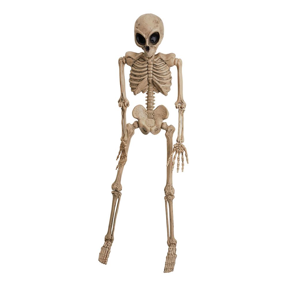Alien Skelett Prop