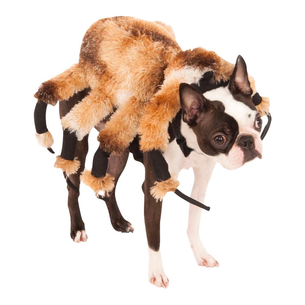 Jättespindel Hund Maskeraddräkt - Small
